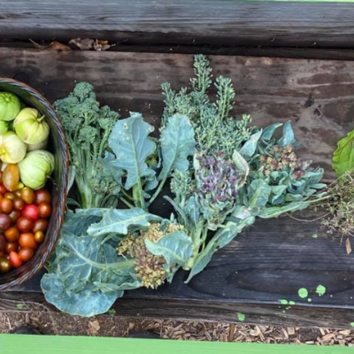 image of veggies and plants at a farm stand