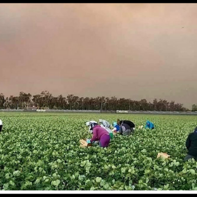 Image of farmworkers in the fields with smoke filled skies